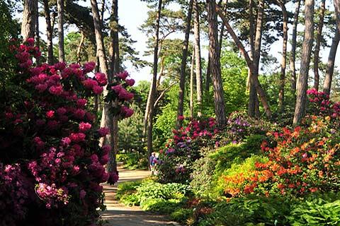 Photo of Parc Floral de Paris