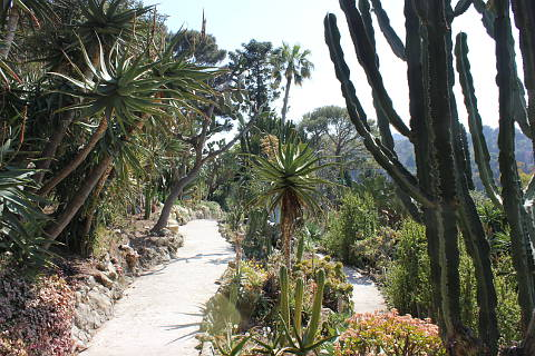 Cacti in the gardens of the Villa Ephrussi