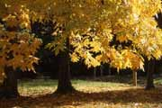 Arboretum des Barres