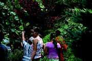Jardin aux Plantes la Bouichere