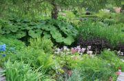 moisture-loving-plants