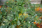 mixed-plants