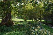 shade-planting