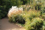 permanent-grasses