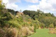grasses-garden