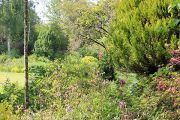 trees-herbaceous