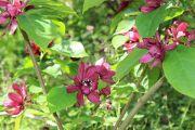 jardin-des-lianes2