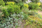 mediterranean-garden