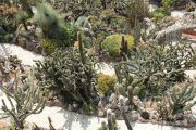 mixed-cacti