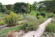 botanic-garden-2