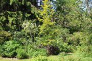 shrub-border