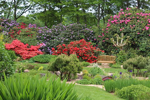 Rhododendrons in the Jardin des Renaudies