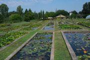 nursery-ponds